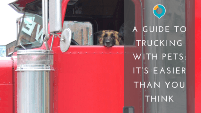 A Guide to Safely Trucking with Dogs