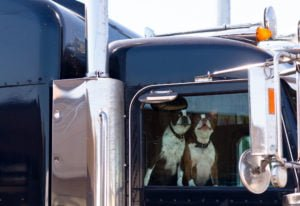 two dogs in big rig